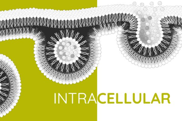 Lipolife brand focus - liposomal delivery